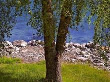 Foto di un paesaggio estivo
